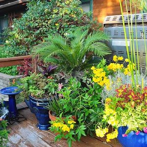 1-deck-garden-south-central